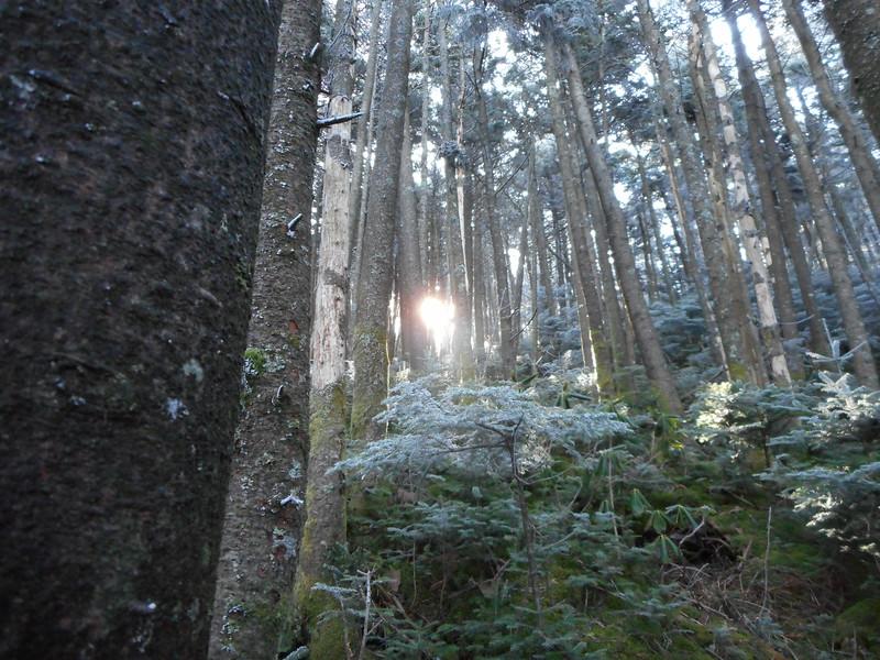 Climbing up Roan Mountain