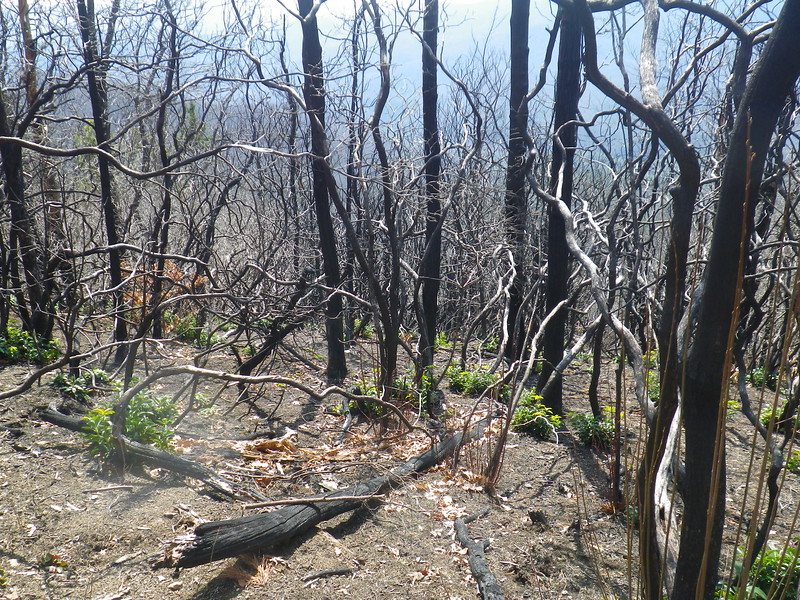 2016 forest fire damage before the final descent to Dennis Cove Road