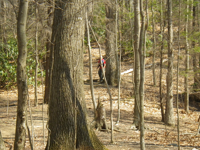 Friday morning... who is that sneaking up on me as I have an early lunch at the Moreland Gap Shelter?