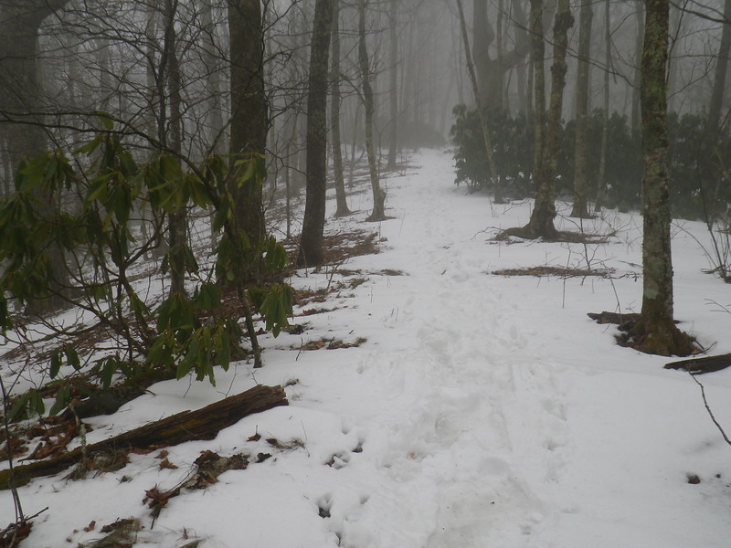 Snow-covered trail on the summit of Bluff Mountain