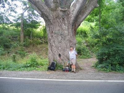 The Dover Oak - Even bigger than the Stalking Tortoise!
