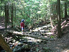 Navigating the log bridge