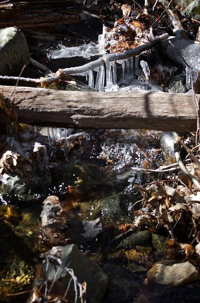 Squirrel Rapids Id