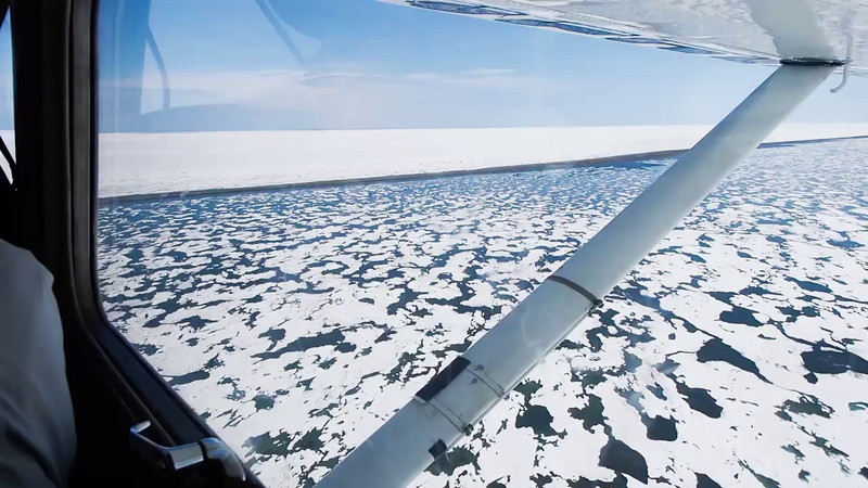 Polar Bear Search