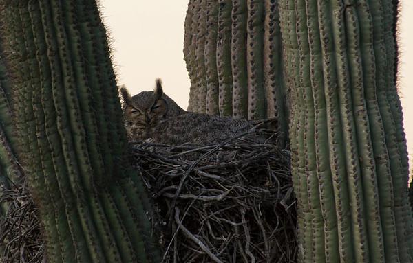 2016-03-12 Phoenix Sonoran Preserve