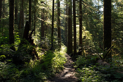 This is what the trail to the lake looked like most of the way.  The early morning sun didn't cut too far through the thick tree canopy.