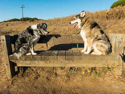 Boost and Tika on Bob's Bench.  Dedicated on behalf of the first Executive Director of POST (Peninsula Open Space Trust), Bob Augsburger.