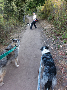 Tika and Boost and Susan and Kinetic on the trail.