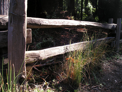 I liked the textures of this split-rail wood fence and the grass growing alongside it, beside a path leading through the redwoods in a rare spot where the sun made it through to the ground.