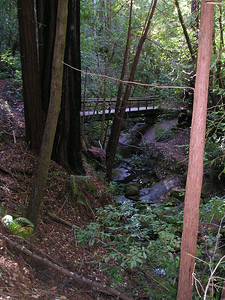 Another bridge on the Shadowbrook Trail.