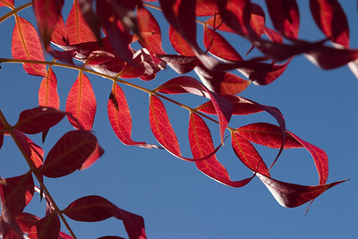 Here's the same gorgeous red autumn foliage backlit against the beautiful autumn sky.