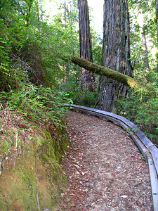 Another section of the Shadowbrook Trail.