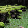 thick moss on a very old split rail fence