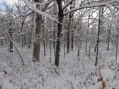 Black Brook Trail Ramble 12192010
