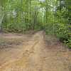 Forest Road---dirt. My kinda place.