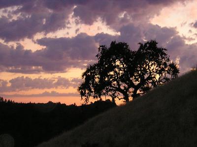 A lone oak awaits the evening.