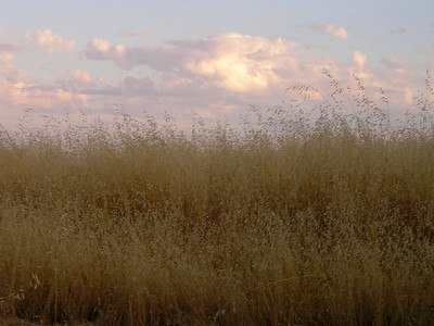 We had wonderful clouds this evening, over the thousands of acres of dried oat grass.