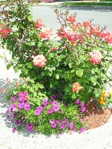 Many lovely flowers.