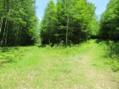 Brown Ash Swamp Bike Trail