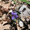 Signs of spring along the Dismal Trail