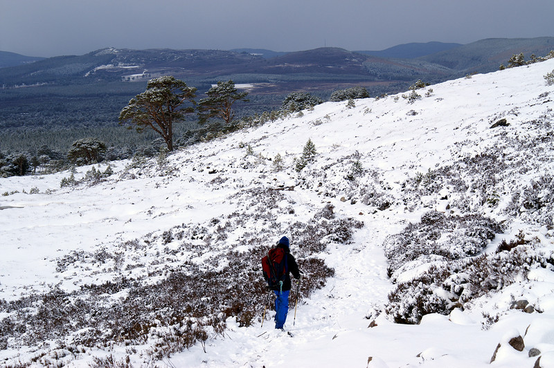 Towards Rothiemurchus forest