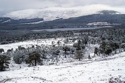 Rothiemurchus forest with Loch Morlich beyond
