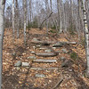 These log steps don't have many years left in them.
