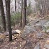 Stretch of trail just below ledges where someone has used an ax to remove some blowdowns.  Pretty fresh cuts.