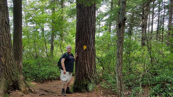 Chamberlain Reynolds Memorial Forest 2018.07.31