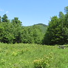 This is the meadow with picnic table.  It is pretty over-grown with waist high growth.  Beware as it is good place to pick up ticks.  It offers a view of Young Mountain.  It was 1:00 so this was a good time to eat a delicious Italian Sandwich purchased from Squam Lake Marketplace.