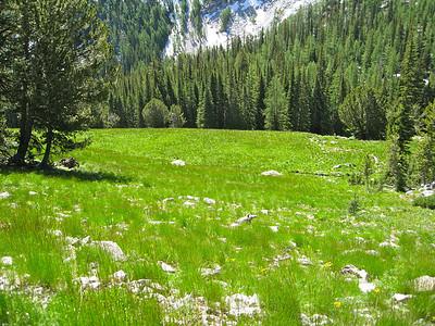 Meadows.