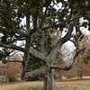 My favorite tree at Piedmont Park