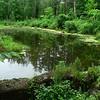 Pond at Colony Farm.