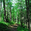 Hatcher Mountain Trail is fairly narrow and takes you through mixed pine and hardwood forests