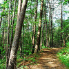 Cooper Road Trail leaves the darker shaded woodland and climbs up through a mix of pines and oaks