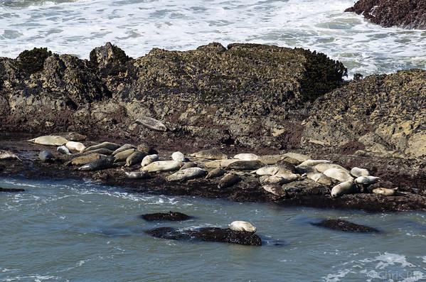 Closer view of seals