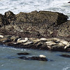 Closer view of seals