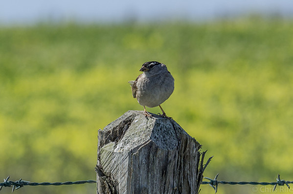 Birds and posts go together