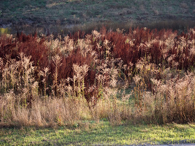 Some of the vegetation along Coyote Creek.
