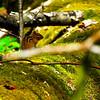chipmunk on Cucumber Gap Trail