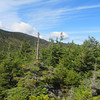 The summit area has scrubby spruce where I looked for a cannister, but found none.