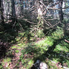 The spur ridge is carpeted with moss and lichens.  I was able to travel with stealth in hopes of sighting a moose, but alas I was dissapointed once again.