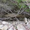 Retaining wall in bank still survives just upstream of main dam