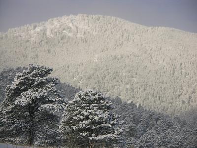 Evergreen Winter '05