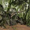 FOMFOK - Castle Rock State Park