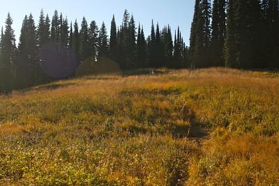 Pretty grassy meadow.