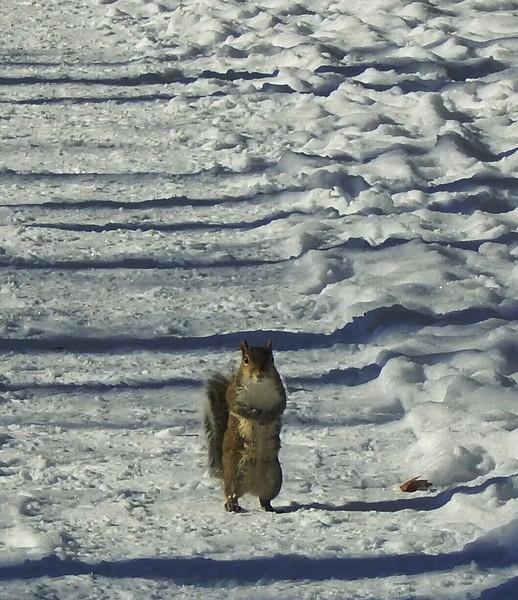 Squirrel waiting  lunch
