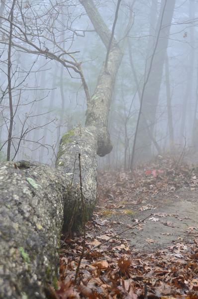 Cool fog serpent