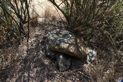 If you didn't know that there was something hidden under the rock in the shade under a shrub off the trail, you'd never notice this.