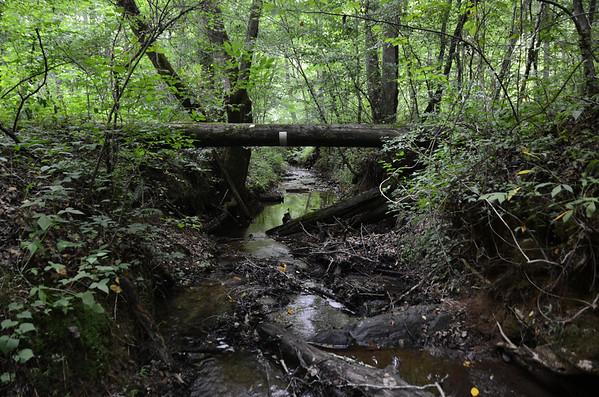 Dawson Forest WMA 7/4/12